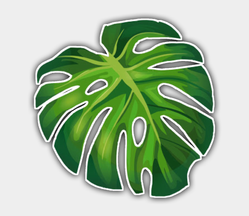 tropical leaf clipart, Cartoons - #aesthetic #tropical #sticker #freetouse #leaf #green - Summer Leaves Transparent