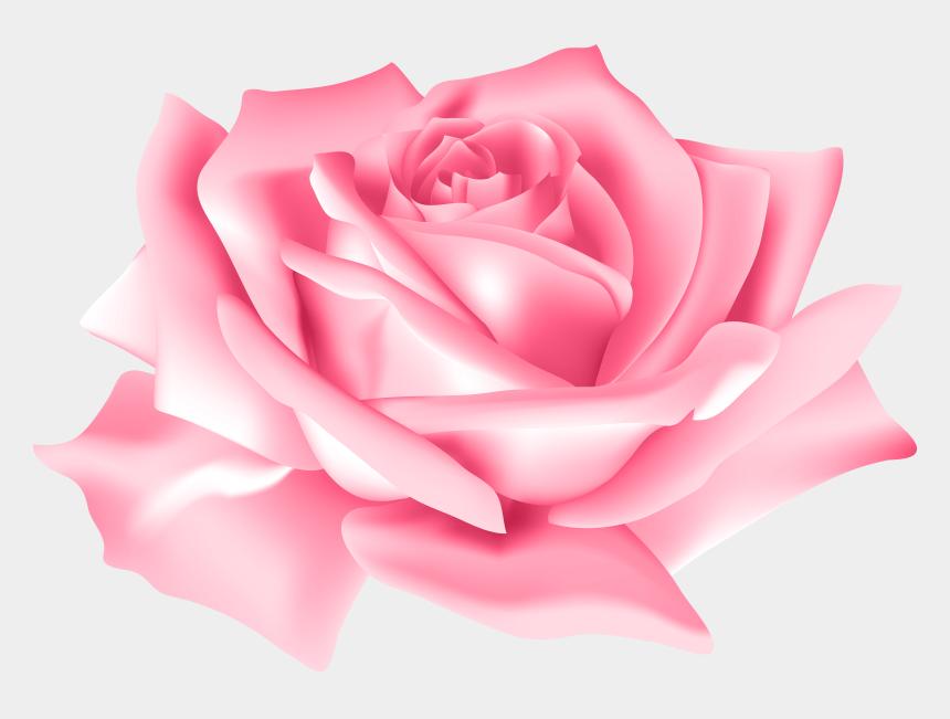 pink roses clipart, Cartoons - Pink Rose Flower Png Clip Art Image - Pink Rose Flower Png