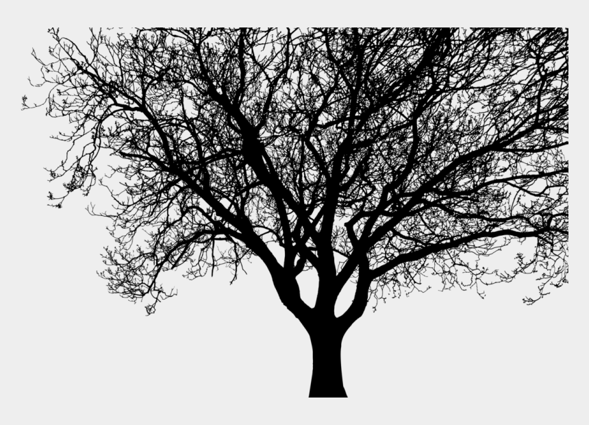 tree branch clipart black and white, Cartoons - Tree Branch Silhouette Drawing - Big Tree Silhouette Png