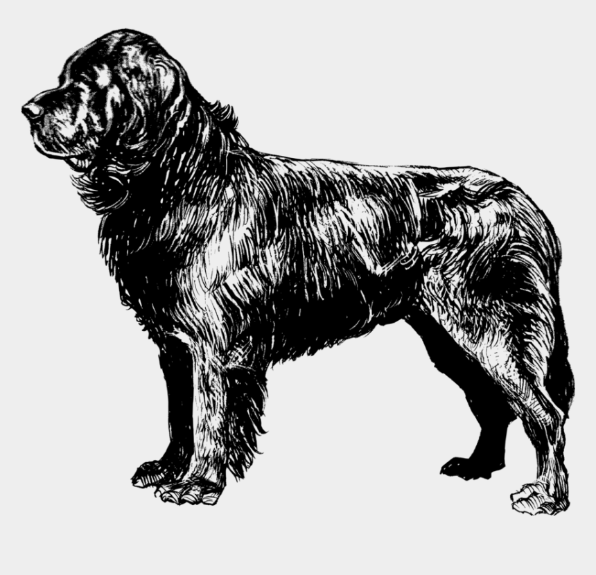 dogs clipart black and white, Cartoons - Newfoundland Dog Clip Art At Clker - Newfoundland Dog Coloring Page