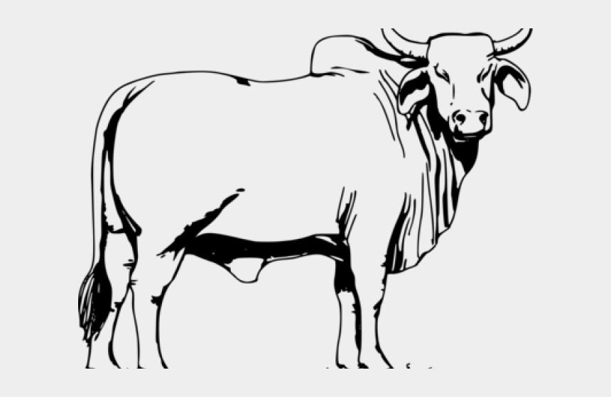 Ox Clipart Angry Cow - Bull Black And White, Cliparts