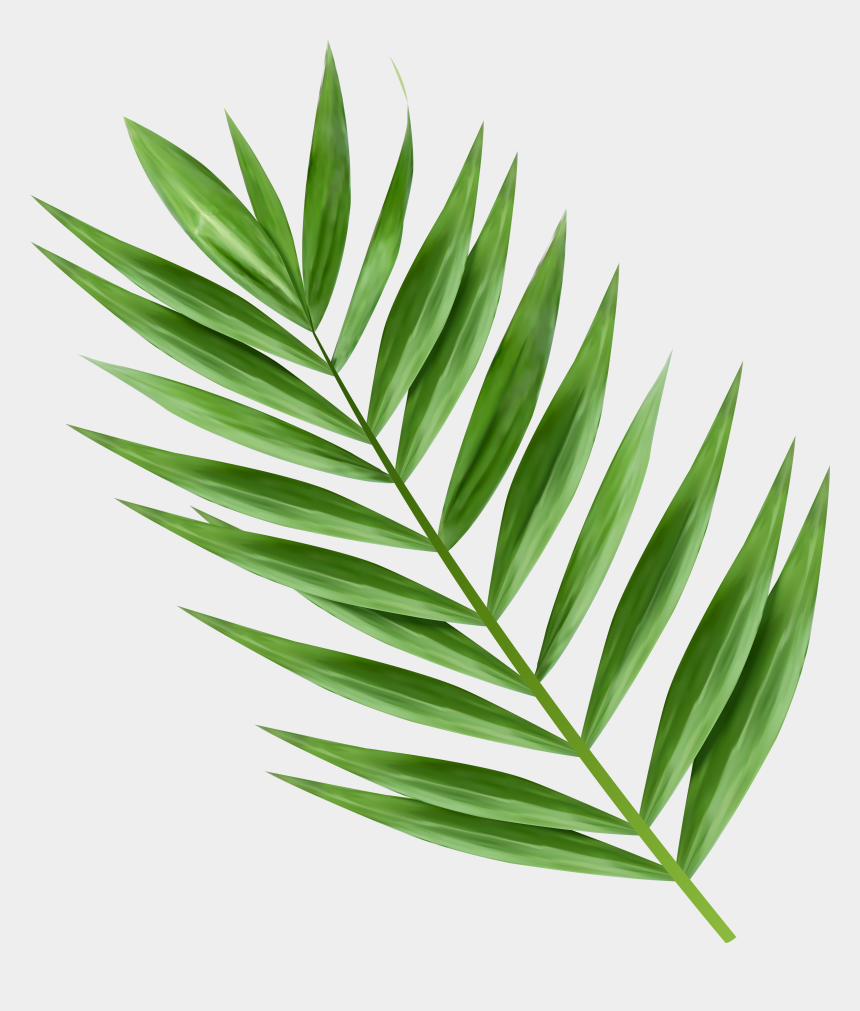 branches clipart, Cartoons - Transparent Image Gallery Yopriceville - Palm Tree Branch Png