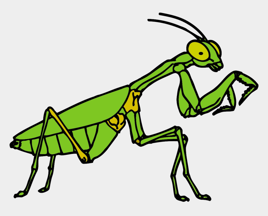 praying mantis clipart, Cartoons - Free Praying Mantis Clipart