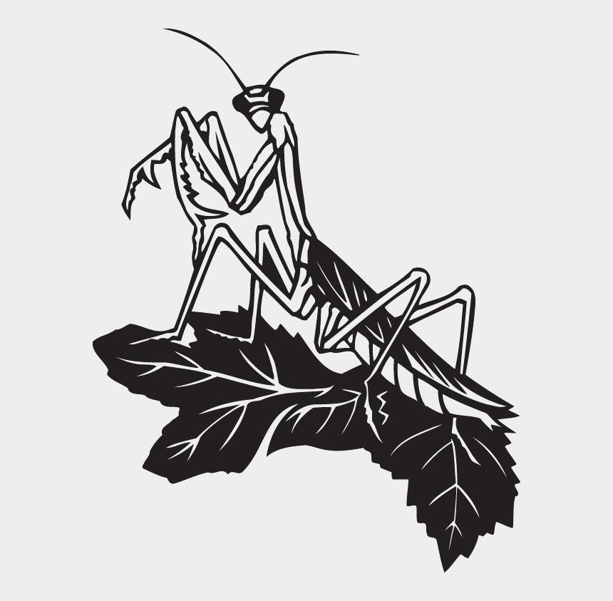 praying mantis clipart, Cartoons - Dc00149 - Black And White Praying Mantis Art
