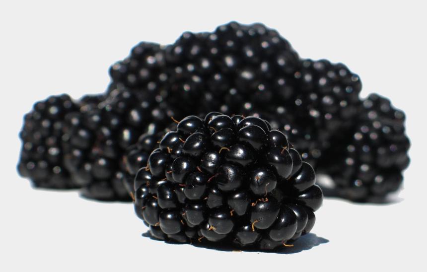 blackberries clipart, Cartoons - Blackberry Png - Blackberries Png