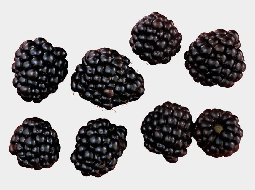 blackberries clipart, Cartoons - Blackberry Fruit Blackberry Variations Blackberry Variations - Blackberry Png