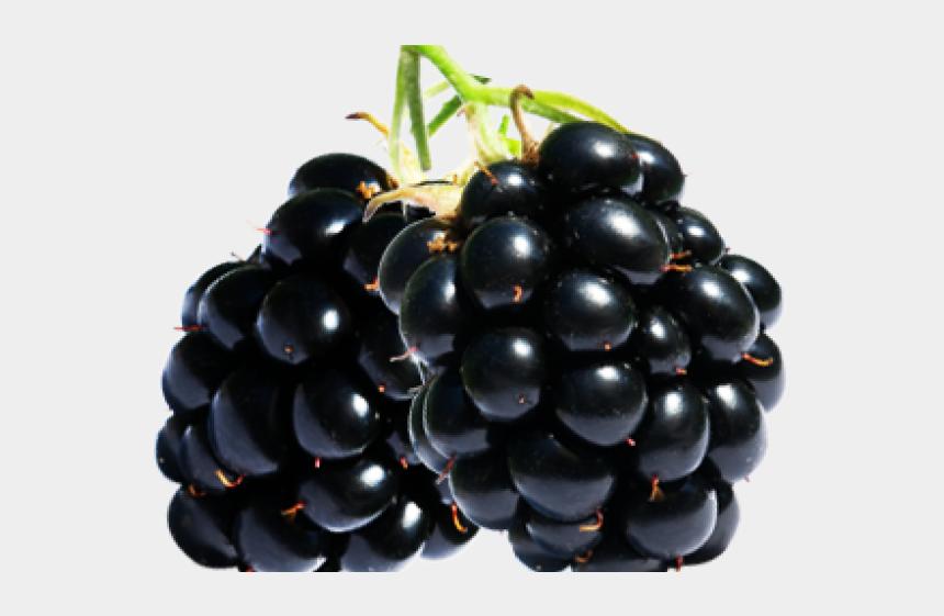 blackberries clipart, Cartoons - Fruta Zarzamora Png