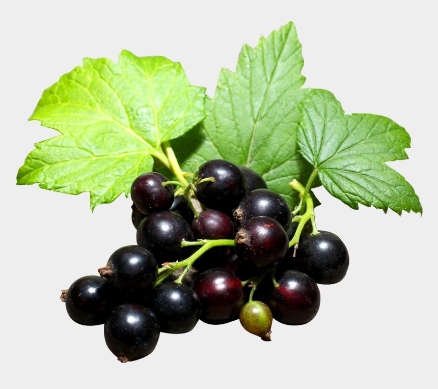 blackberries clipart, Cartoons - Berries,berry,black Currant,currants,fruits - Black Currants Png