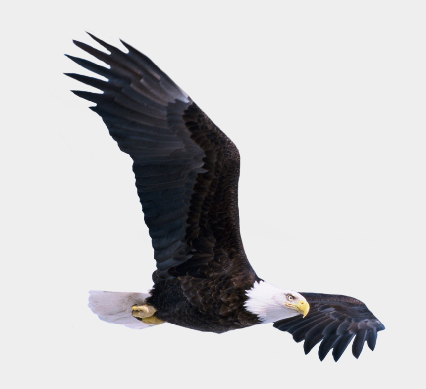 soaring eagle clipart black and white, Cartoons - #eagle #fly #bird #america #baldeagle - Birds Png Images Hd