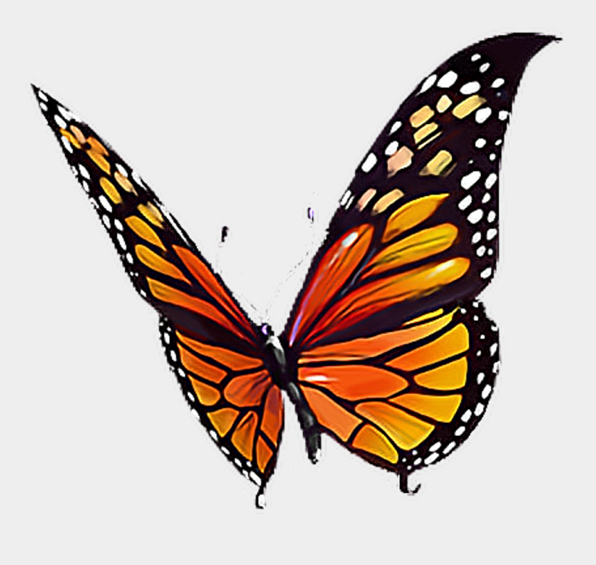 cute butterfly clipart black and white, Cartoons - #butterfly #orange #black #yellow #white #butterflylove - Butterflylove