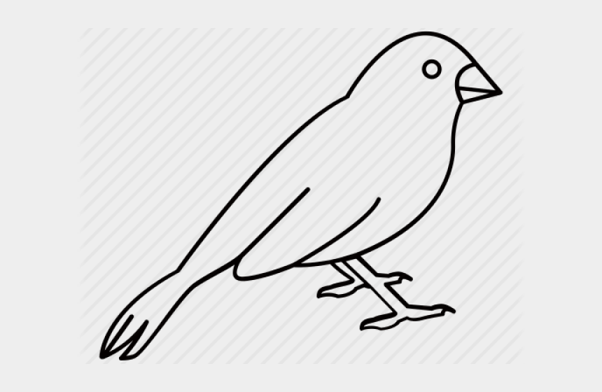 sparrow clipart, Cartoons - Drawn Sparrow Outline - Old World Flycatcher