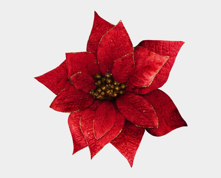poinsettias clipart, Cartoons - Transparent Christmas Flowers