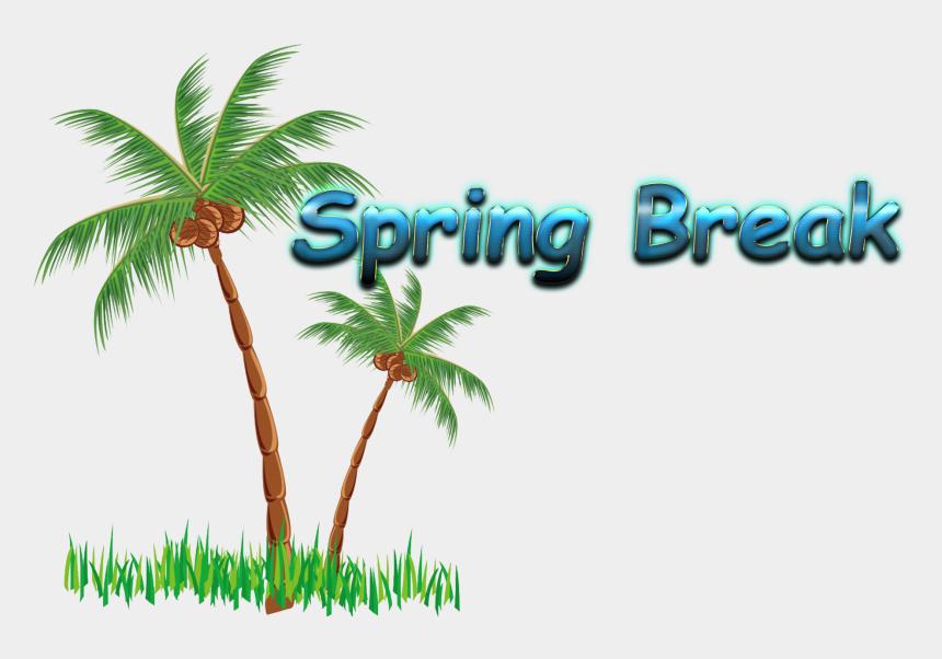 spring break clipart, Cartoons - Coconut Tree In Png