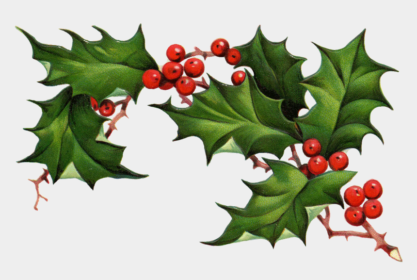Christmas Holly Clip Art.Christmas Holly Border Free Clipart Free Clip Art Images
