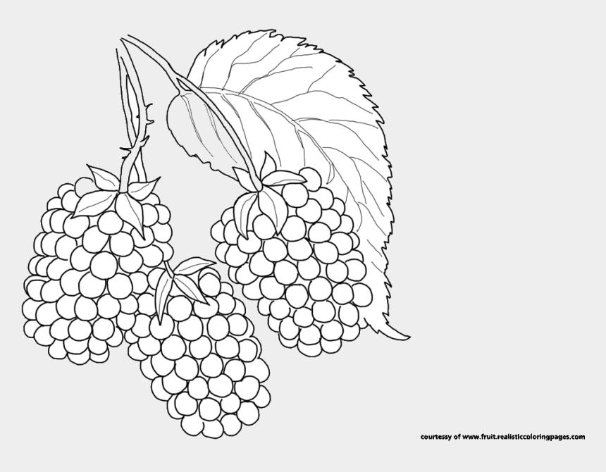 blackberry clipart, Cartoons - Blackberry Fruit Clip Art Free Blackberry Fruit Clipart - Illustration