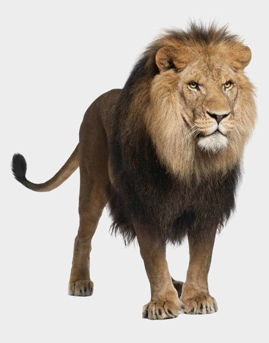 lions head clipart, Cartoons - Hd Lion Png Photo - Sher Png