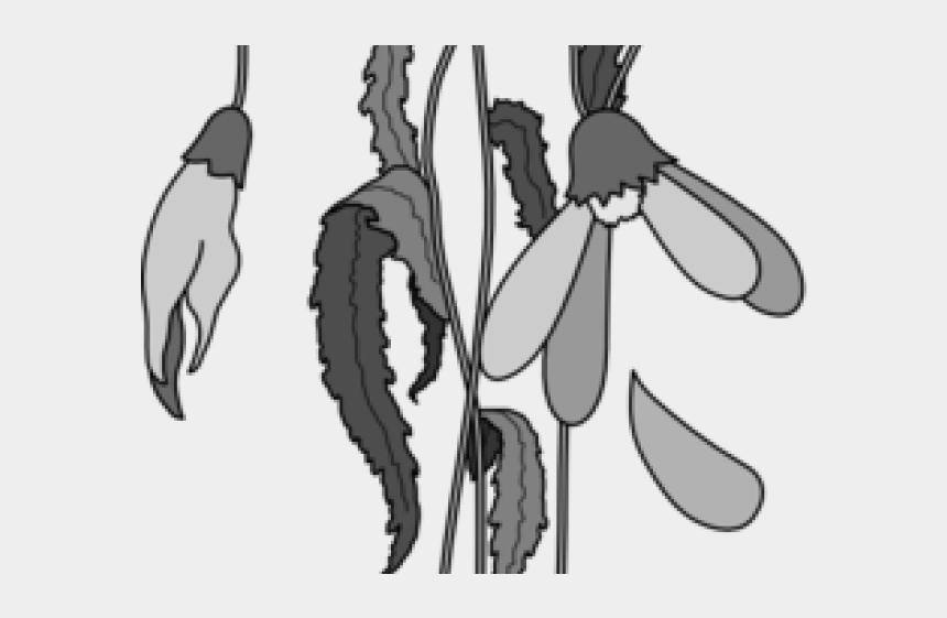 crop clipart, Cartoons - Dead Flower Drawing Easy