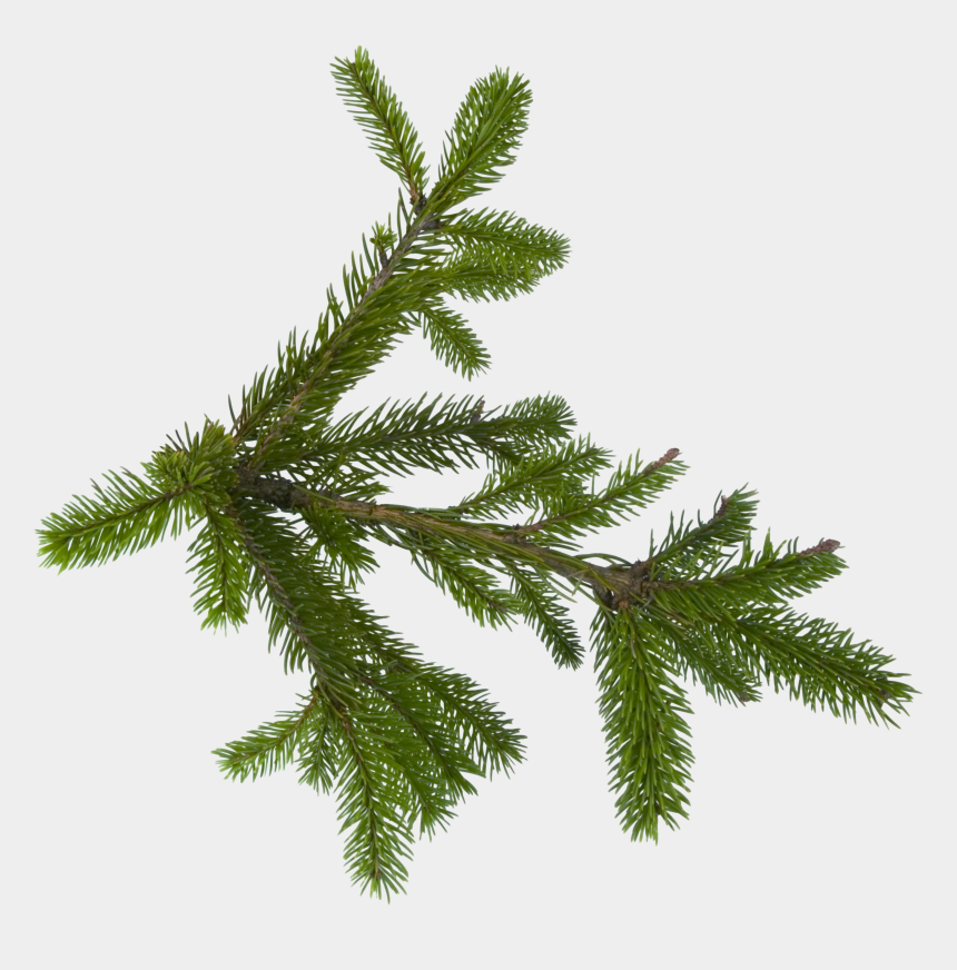pinetree clipart, Cartoons - Pine Tree Clipart Transparent Background - Fir Tree Leaves Png