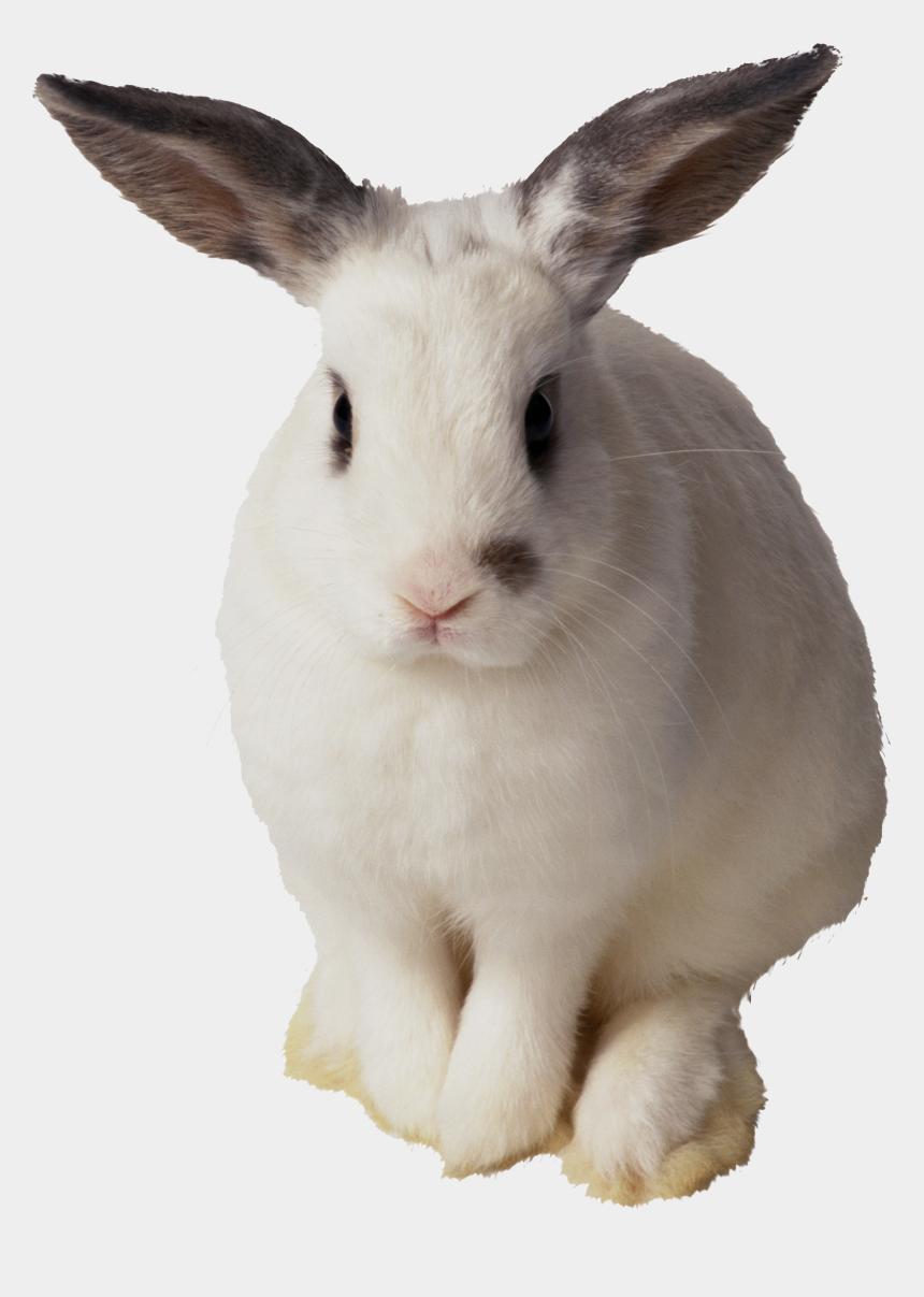 rabbits clipart, Cartoons - Rabbit Png, Rabbit Clipart, Animals, White Rabbits, - Rabbit With Transparent Background