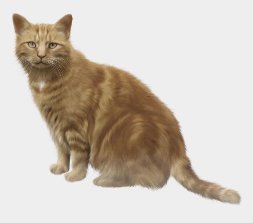 clipart of cats, Cartoons - Kittens Clipart Brown Cat - Cat Meme Box Of Shit