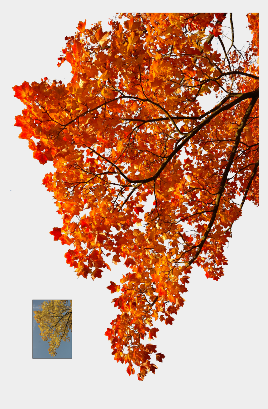 autumn leaves background clipart, Cartoons - Autumn Leaves Falling Png Clipart Stock - Transparent Autumn Tree Png
