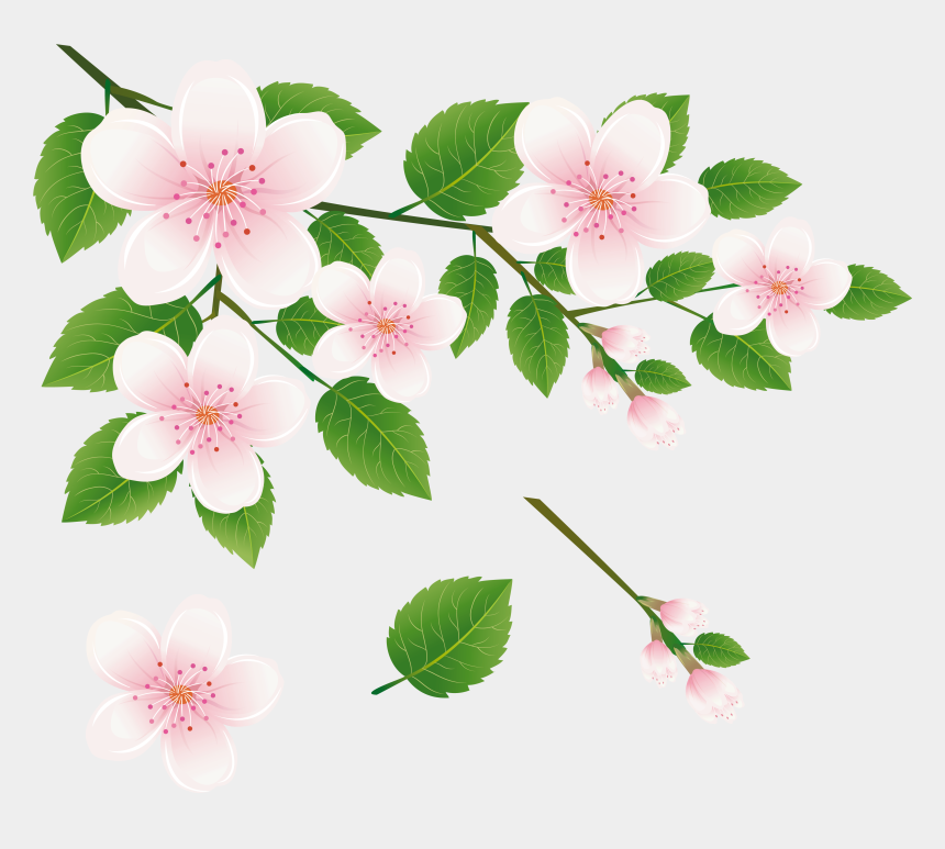 olive branch clipart, Cartoons - Spring Tree Branch With Flowers Png Clipart Picture - All Hd Flower Png