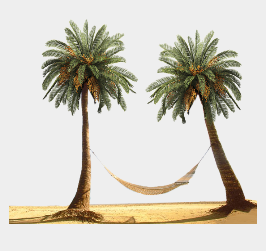 palm trees clipart free, Cartoons - Palm Tree By Designway24 Pluspng - Palm Tree Beach Png