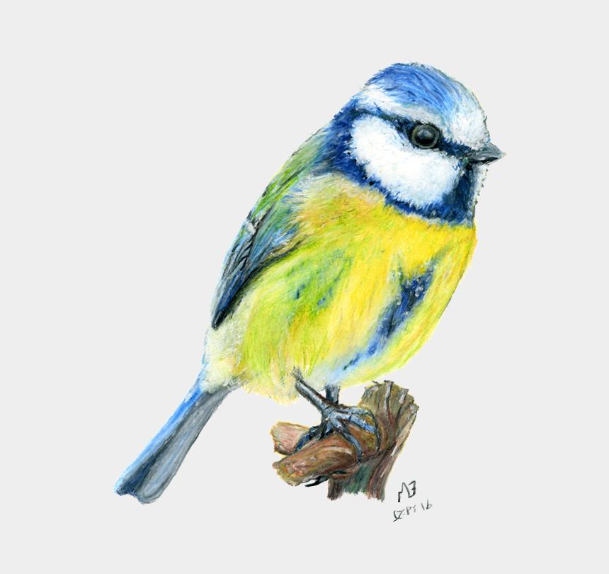 watercolors clipart, Cartoons - Vignette Drawing Watercolour - Blue Tits Art