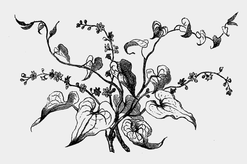 flower stem clipart black and white, Cartoons - Digital Stamp Design Antique Flower Artwork Drawing - Wildflower Clipart Black And White