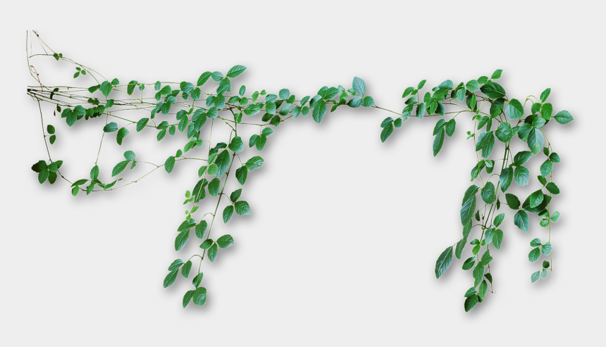 jungle vine clipart, Cartoons - Vines Transparent Png Pictures - Transparent Background Vines Png