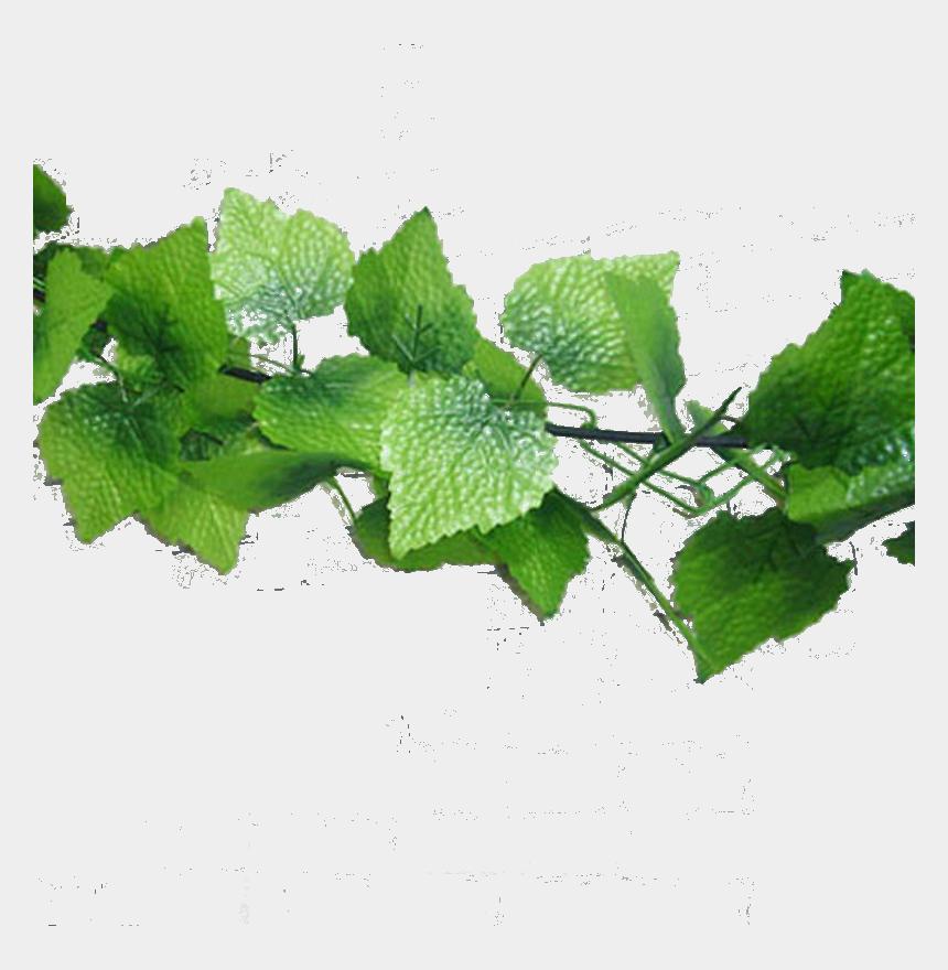 jungle vine clipart, Cartoons - Flower Vine Png - Fake Leaves Png
