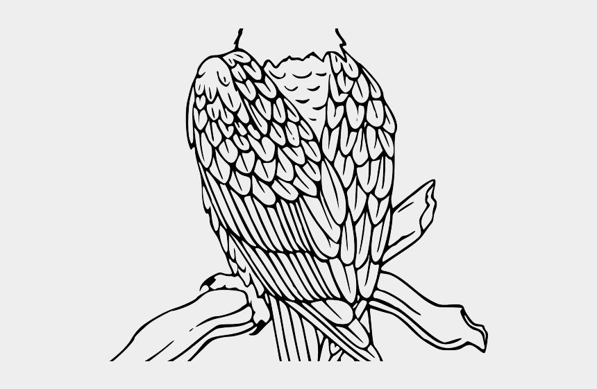 hawk head clipart, Cartoons - Hawk Clipart Eagle Landing - Coloring Page For Bald Eagle