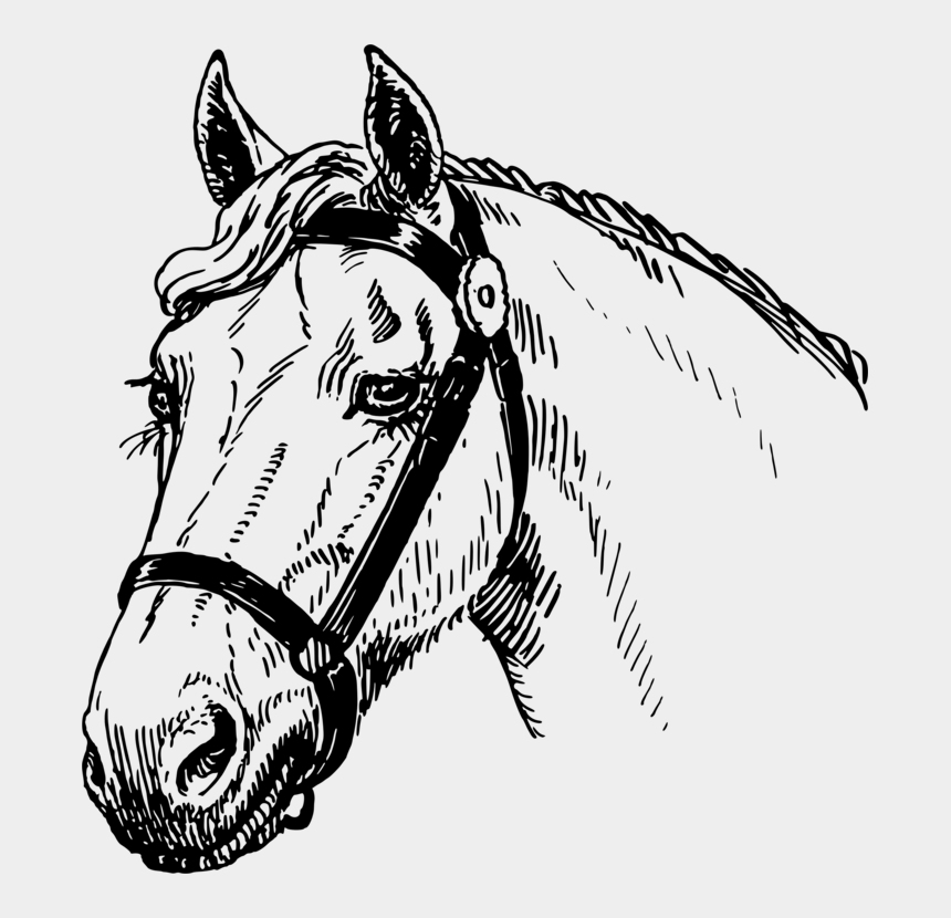 mustang head clipart, Cartoons - Mustang Pony Stallion Horse Head Mask Encapsulated - Horse Head Sketch Big
