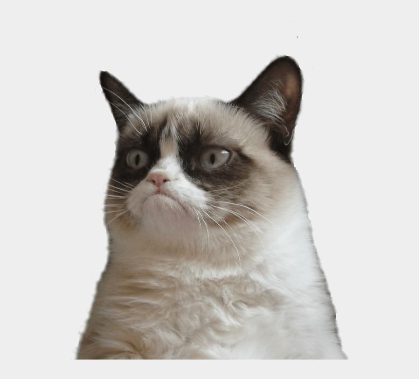 cat clipart transparent, Cartoons - Grumpy Cat Clipart Transparent - Thanks I Guess Meme
