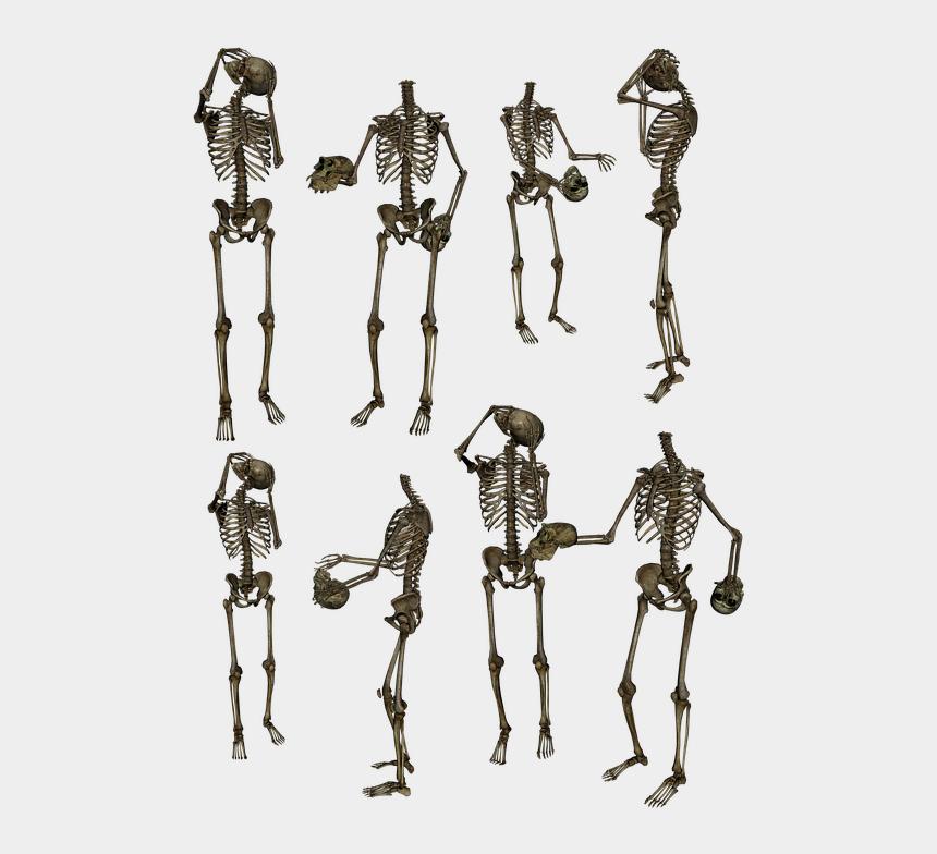 simple skeleton clipart, Cartoons - Skeleton Skeletons Bones Skull Funny Humor Human - Stock Png Skeleton