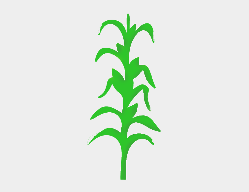 fall festival clipart, Cartoons - So Scroll Down And Image Result For Png Of Cornstalk - Corn Stalk Clipart Transparent