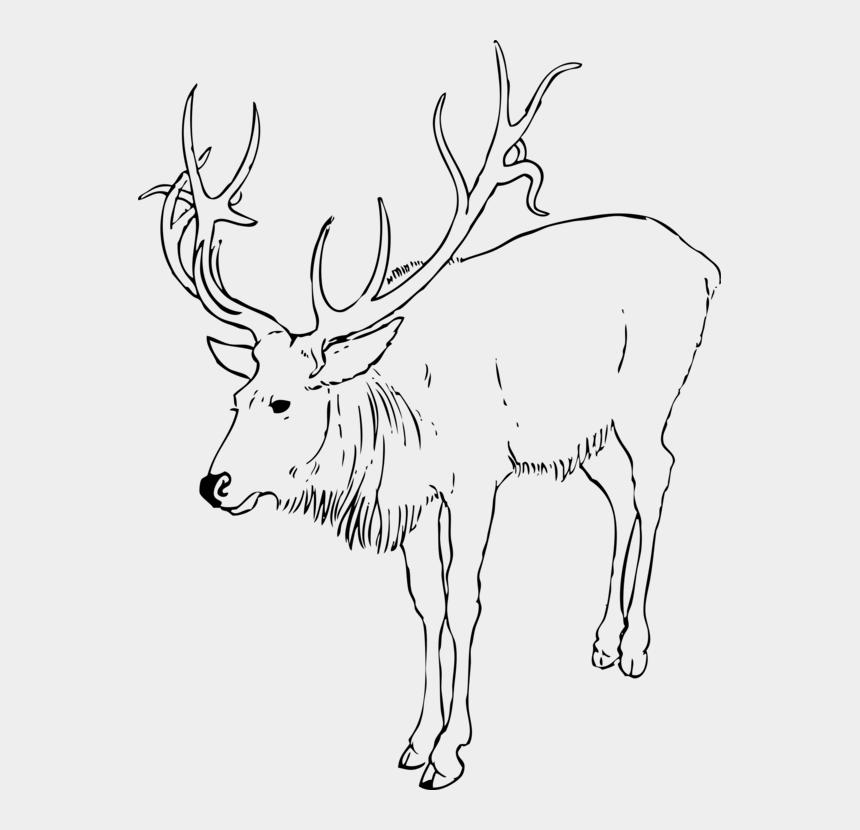 rudolph head clipart, Cartoons - Reindeer White-tailed Deer Moose Rudolph - Reindeer Clipart Black And White