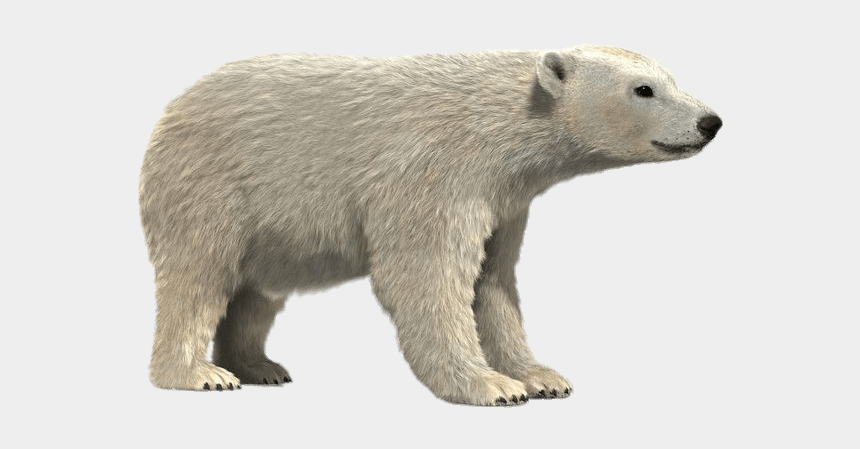 polar bear on ice clipart, Cartoons - Polar Bear 3d Model - Realistic 3d Polar Bear