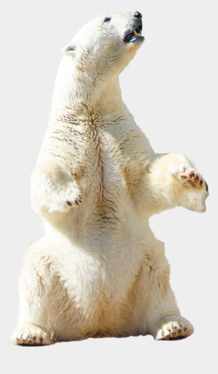 polar bear on ice clipart, Cartoons - Polar Bear Sitting - Transparent Polar Bear Sitting