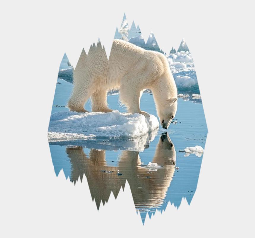 polar bear on ice clipart, Cartoons - #polar #bear #ice #scpolarbears #polarbears #freetoedit - Polar Bears On Ice Beautiful