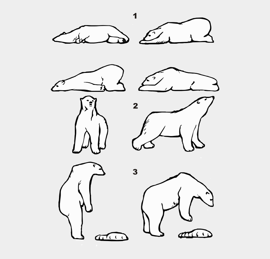 polar bear on ice clipart, Cartoons - Picture From Wikimedia Ursus Maritimus Posture - Draw A Polar Bear Lying Down