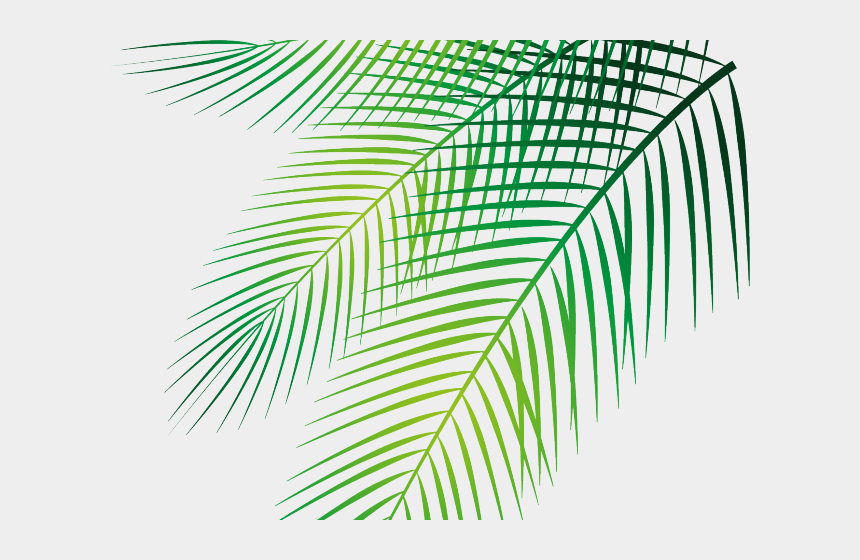 palm leaves clipart, Cartoons - Date Palm Clipart Palm Leaves - 棕櫚 葉 Png