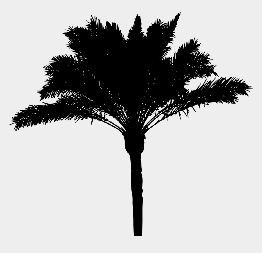 palm trees clipart black and white, Cartoons - Black Palm Tree Png - Tree Silhouette Png