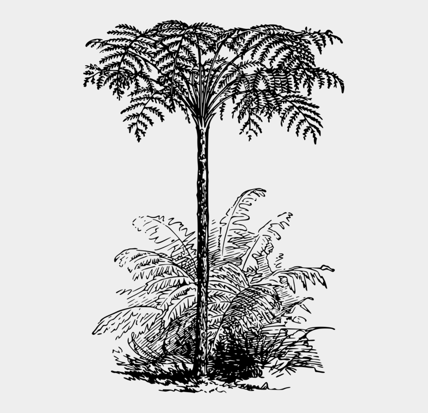 palm trees clipart black and white, Cartoons - Stem Drawing Palm Tree - Tree Fern Black And White
