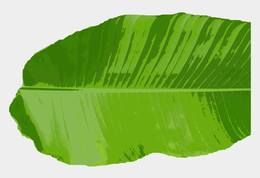 leaf clipart free, Cartoons - Green Leaves Clipart Different Kind Leaves - Clipart Banana Leaf Png