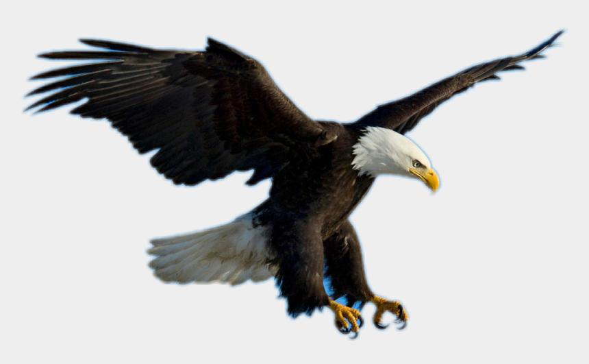 bald eagle clipart, Cartoons - Bald Eagle Clipart Picsart - Eagle Flying