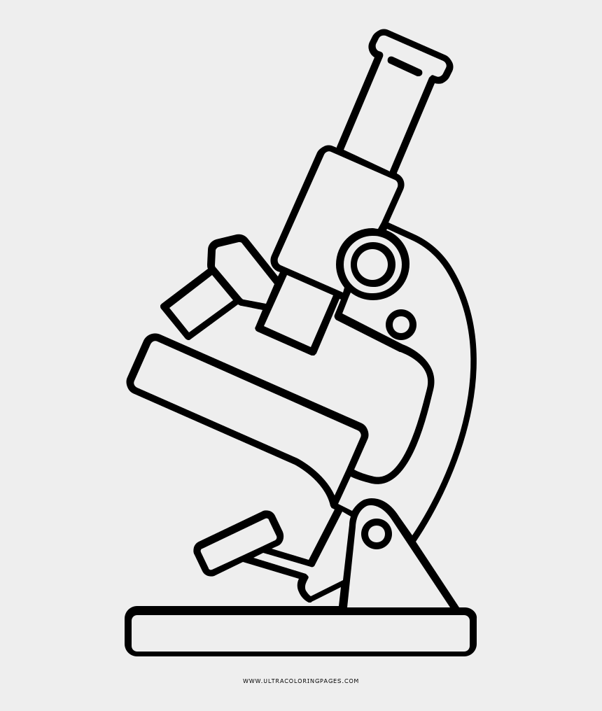 ovary drawing microscope drawing microscope cliparts cartoons jing fm ovary drawing microscope drawing