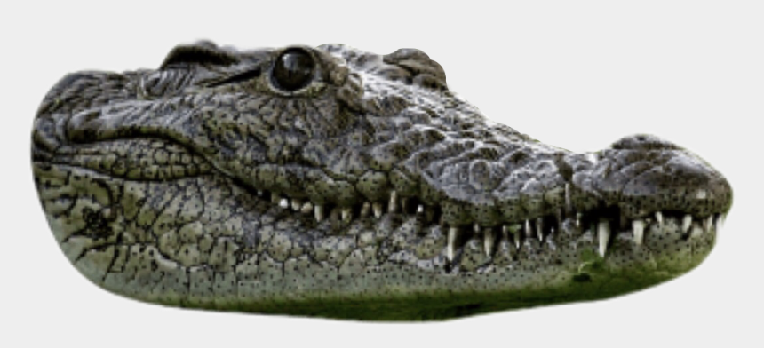 aligator clipart, Cartoons - American Crocodile