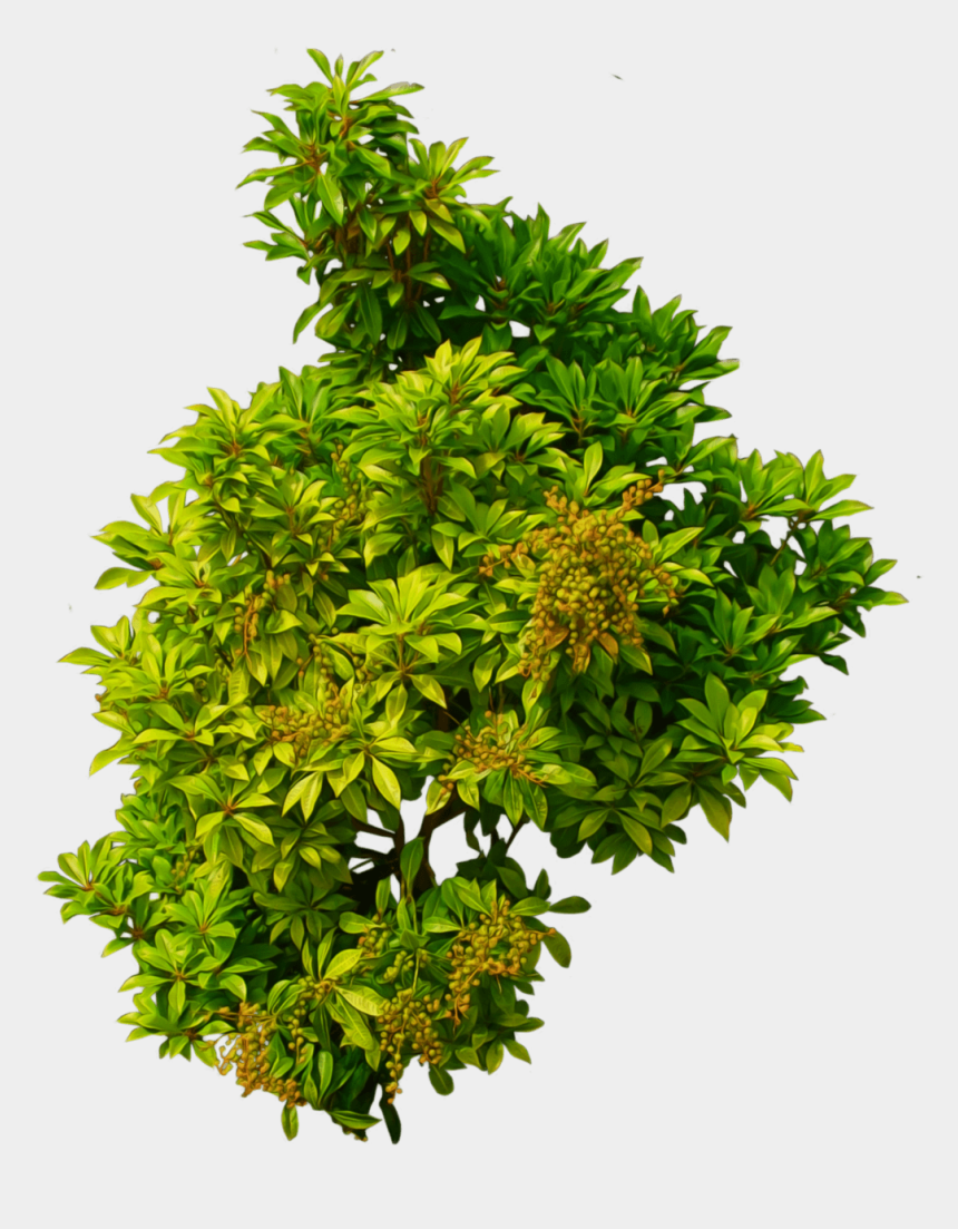 bushes clipart, Cartoons - Shrub, Bushes Png Transparent Images - Plant Top View Png