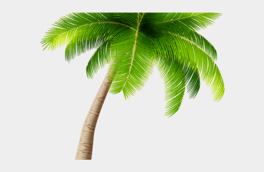 coconut trees clipart, Cartoons - 28 Palm Tree Clipart Transparent Background Free Clip - Palm Tree Transparent Background